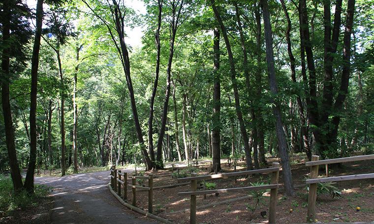 里山型 樹木葬